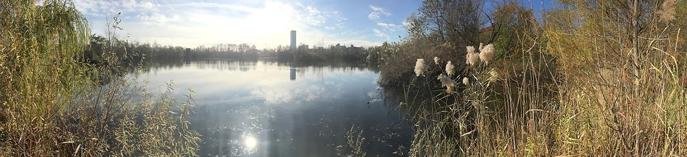 Panorama of Reservoir #3 in fall. The photo was taken from the perspective of someone on the northern bank facing south. Tall brown grasses, mostly phragmites, frame either side of the photo with the water in the center reflecting clouds, the high white sun, and Journal Squared. The trees have lost about half of their leaves.