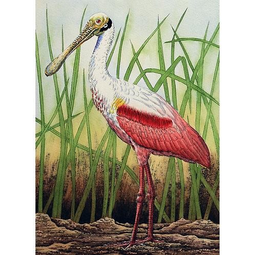 """Roseate Spoonbill in Grass"""
