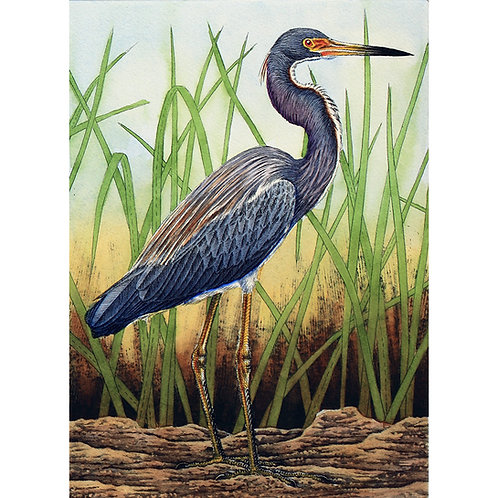 """Tri-Colored Heron in Grass"""
