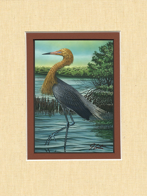 """""""Reddish Egret"""""""