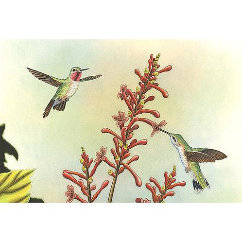 """Ruby-throated Hummingbirds"" C.E."