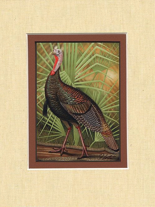 """""""Wild Turkey"""""""