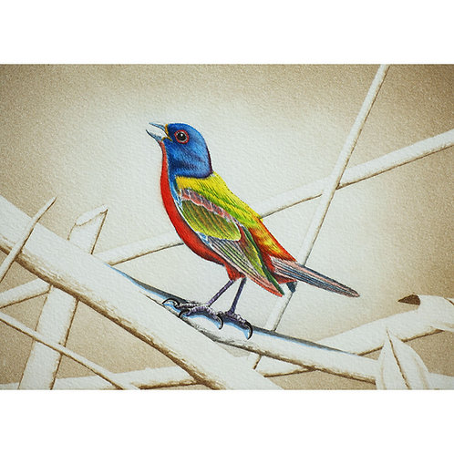 """""""Painted Bunting"""""""