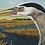 "Thumbnail: ""Great Blue Heron Vista"""
