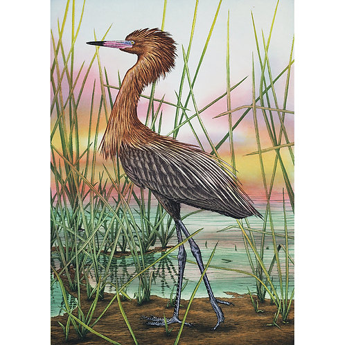 """American Reddish Egret"""