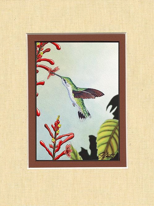 """""""Ruby Throated Hummingbird"""" female"""