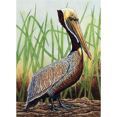 """""""Brown Pelican in Grass"""""""