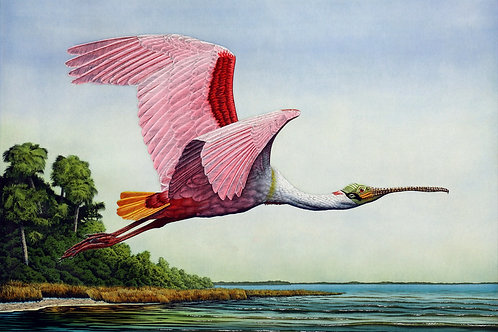 """Roseate Spoonbill in Flight"""