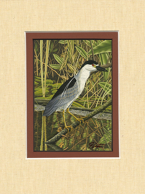 """Black-crowned Night Heron"""