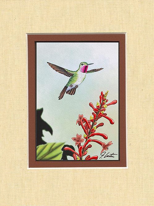 """""""Ruby Throated Hummingbird"""" male"""