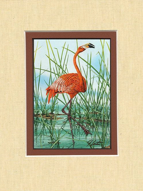 """Caribbean Flamingo"""