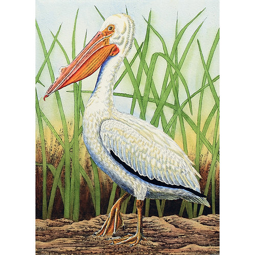 """""""White Pelican in Grass"""""""