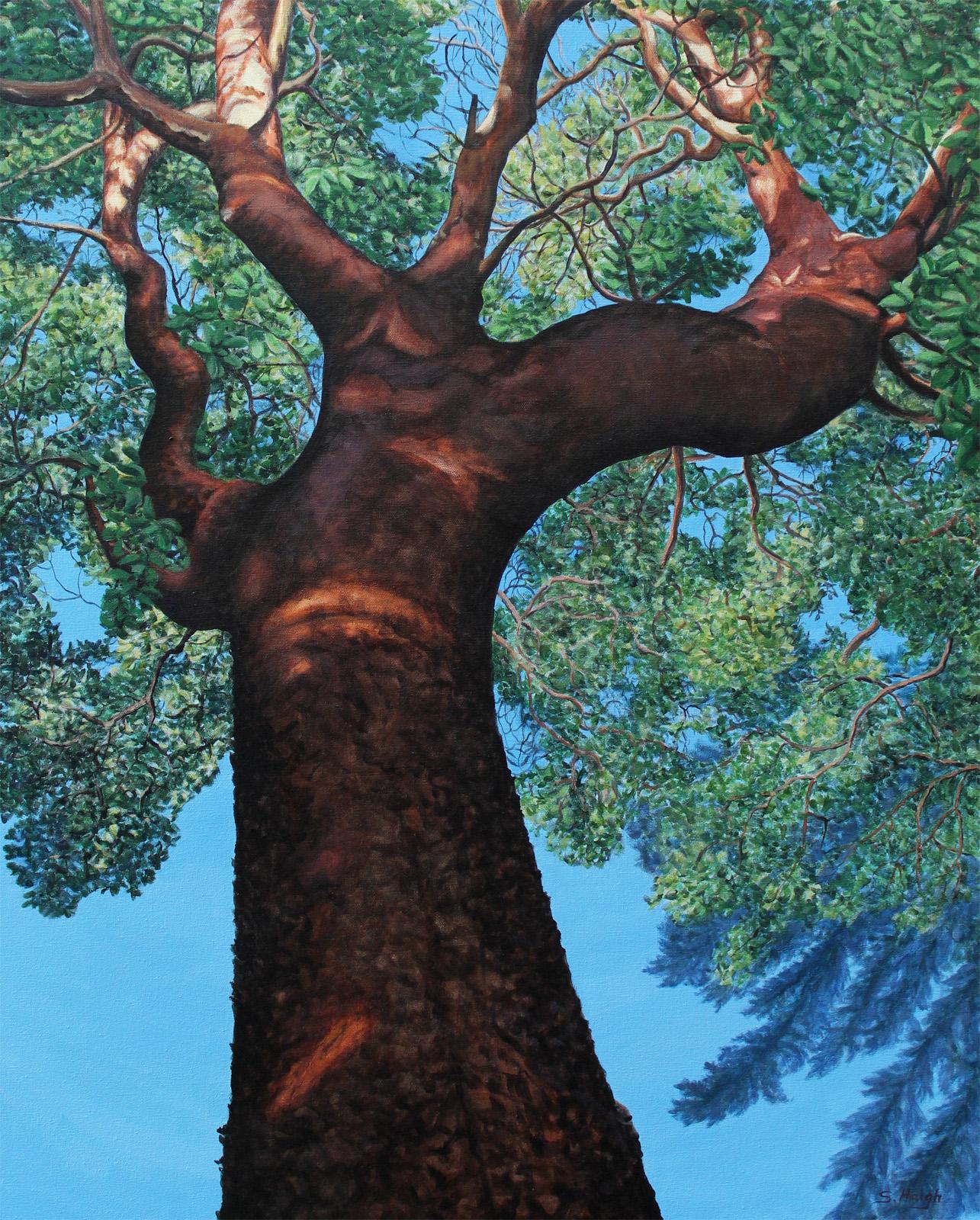 Arbutus Giant