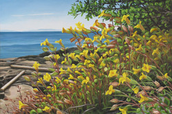 Mimulus by the Sea