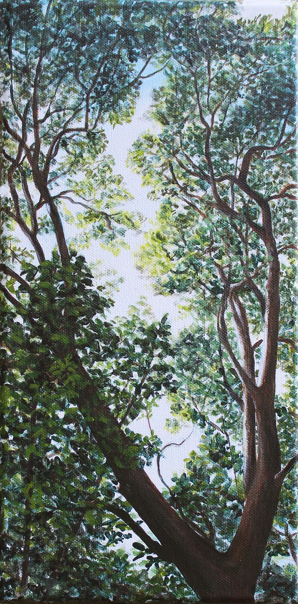 """Arbutus Sky   acrylic on canvas 12"""" x 6"""""""