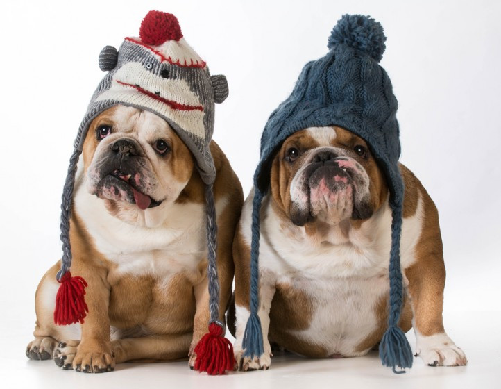 how to keep your pet warm this winter