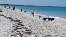 Best Dog Beaches in Perth