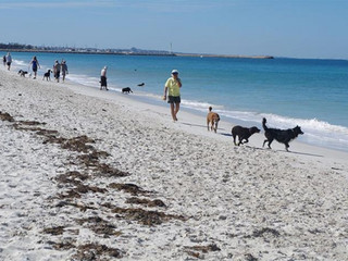 Best Dog Beaches in Perth