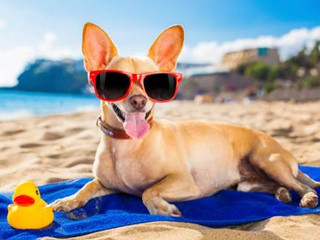 How To Take Care of Your Pets While You're On Holiday