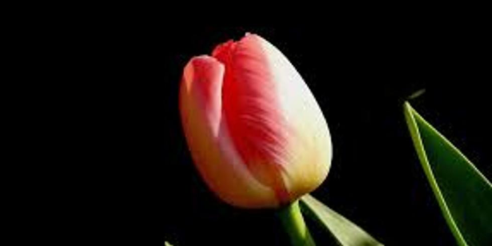 Tulips at Artfull
