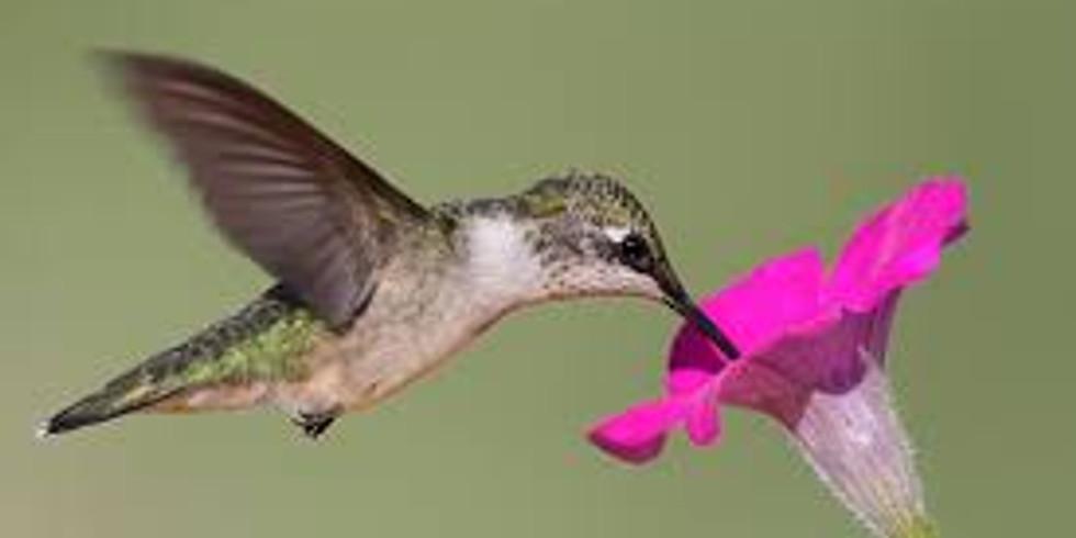 Hummingbird at ARTFULL