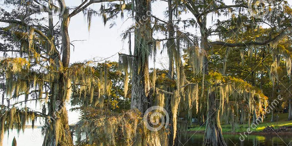 Louisiana Swamp - POP UP Virtual Art Class!