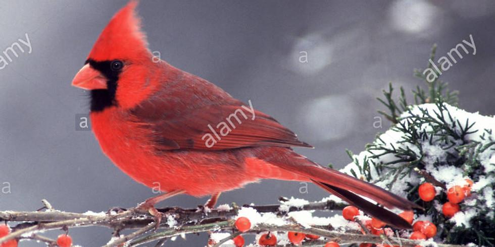 Winter Cardinal - A Virtual Art Class