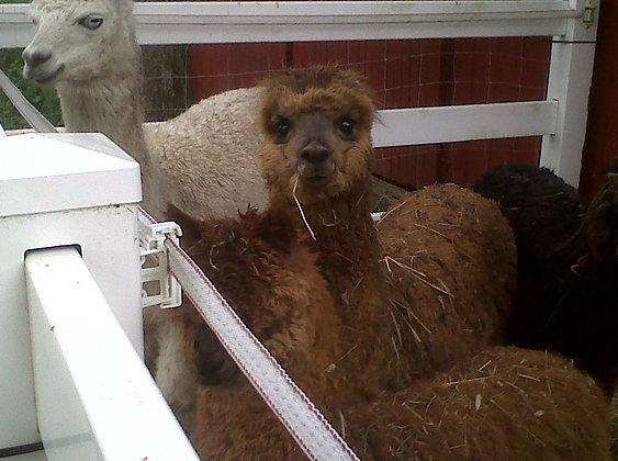 Alpaca DK yarn - light tweed (per skein)