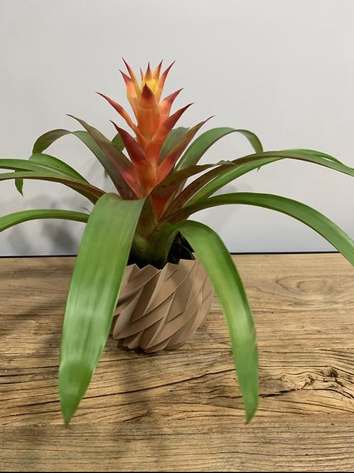 plante au choix du fleuriste
