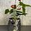Thumbnail: Anthurium 5 pouces