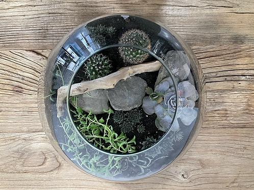 Terrarium cactus plantes grasses