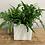 Thumbnail: plante au choix du fleuriste