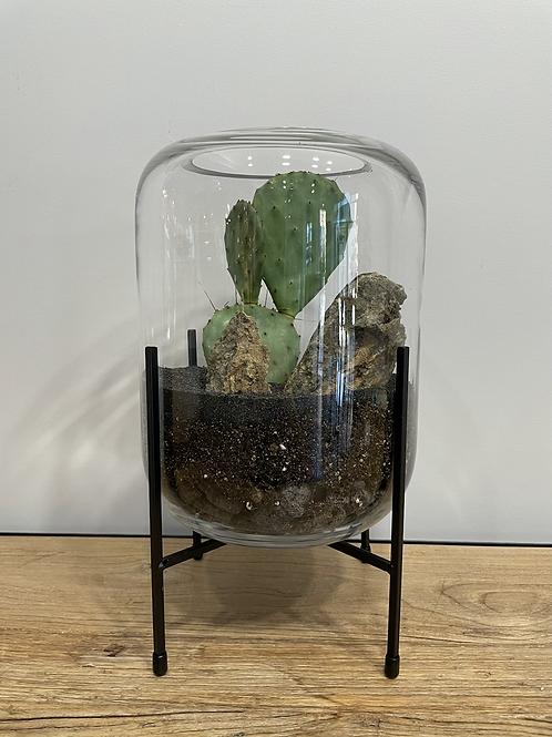 Terrarium opuntia