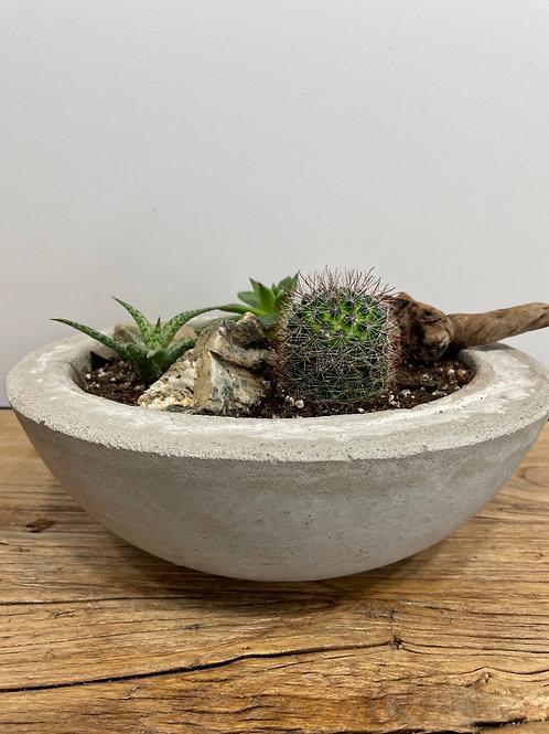 terrarium cactus et plantes grasses