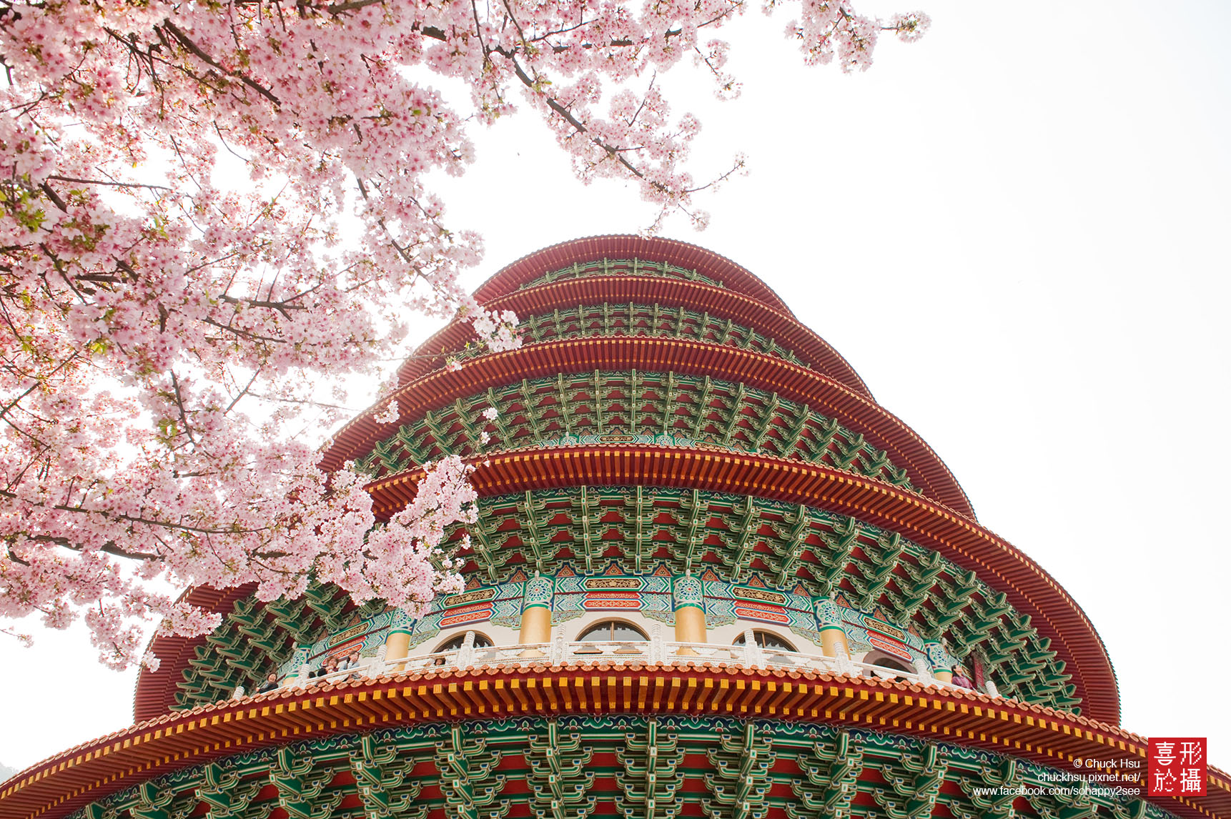 天元宮吉野櫻 Sakura Taipei