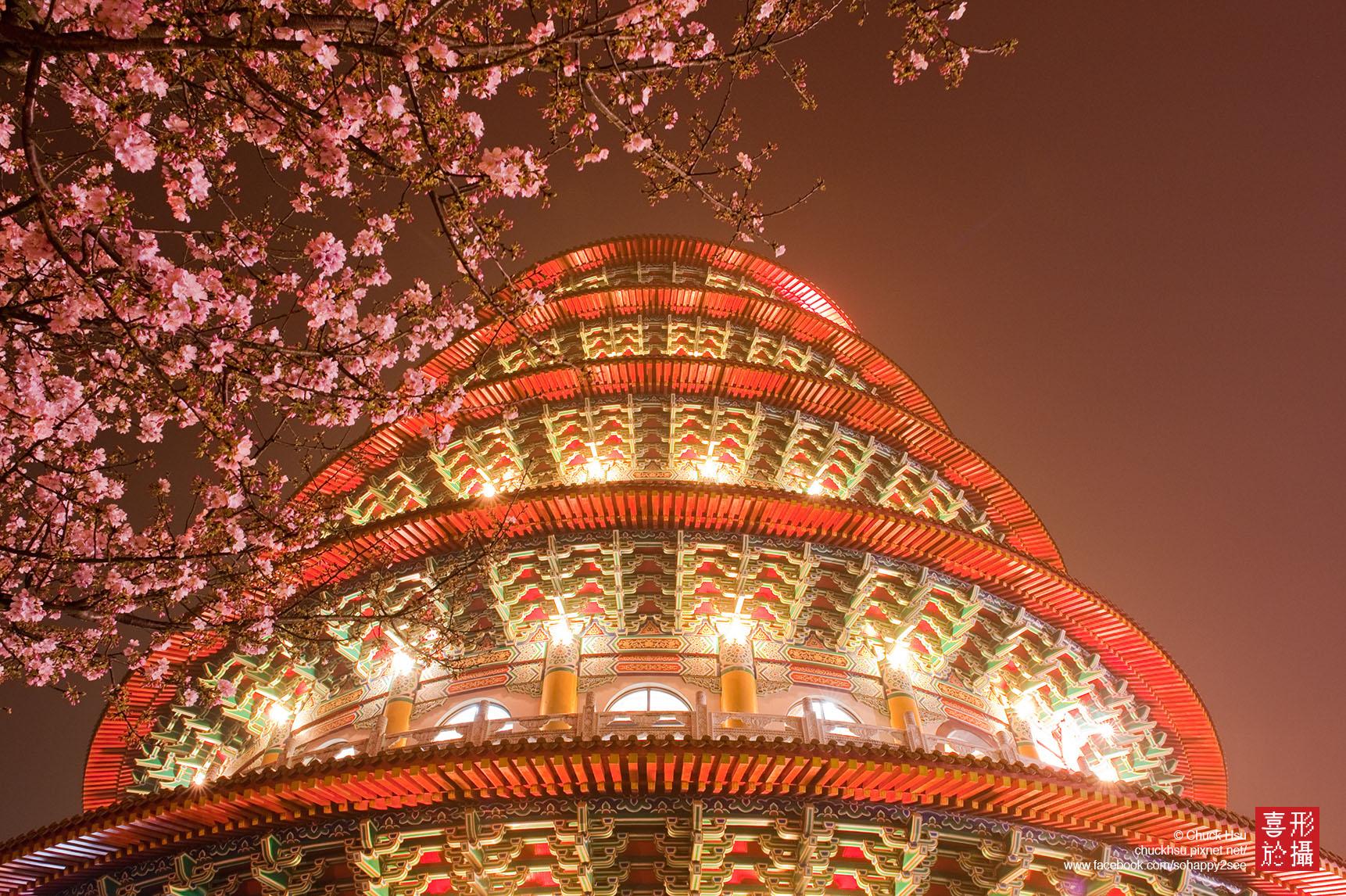 天元宮夜櫻 Sakura Taipei