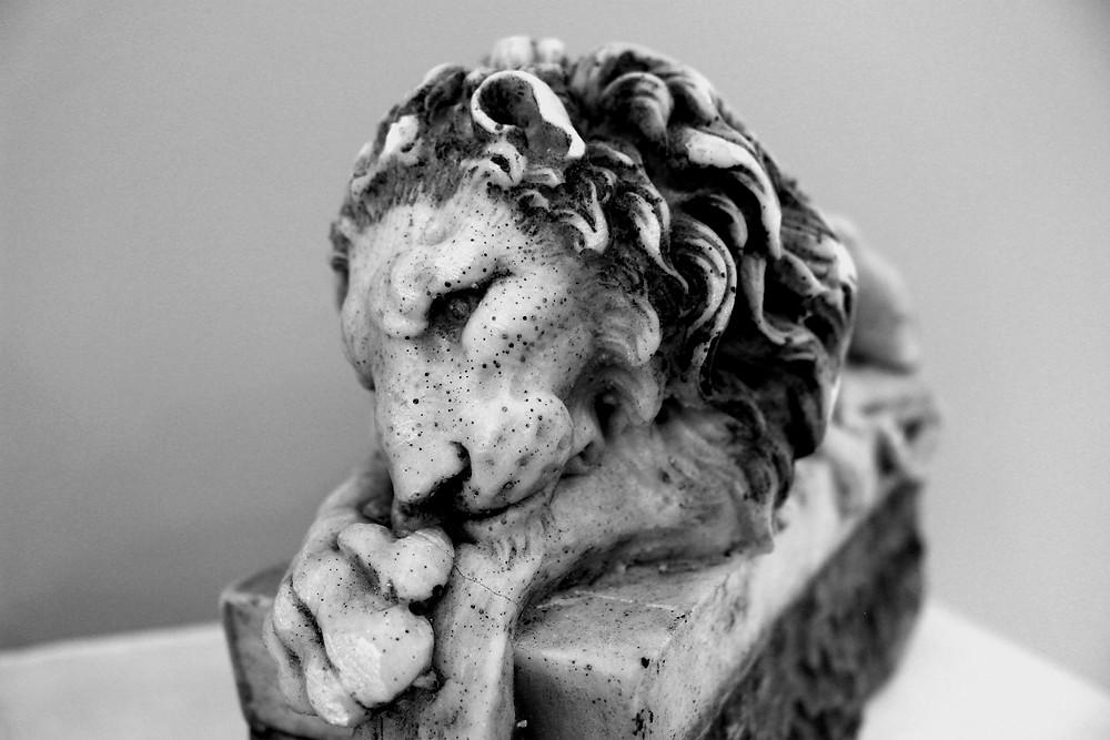 leone studio Gianluca Ferraro