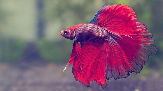 taiyo-pets-bg-fish.jpg