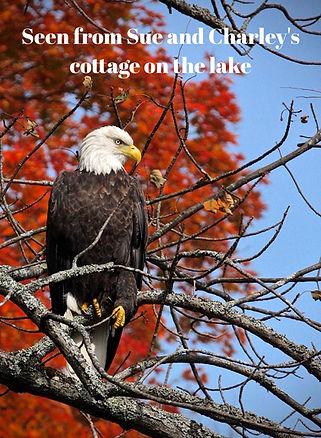 McKinley Eagle.jpg