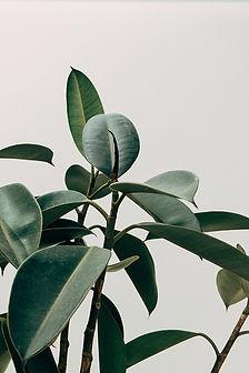 creative-shot-of-house-plant.jpg