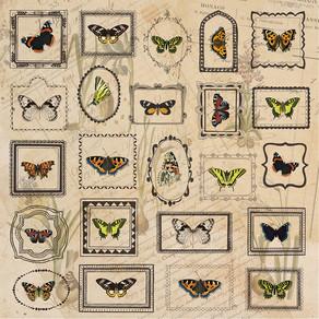 + The study of butterflies +