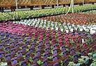 Neals bedding plants home.jpg