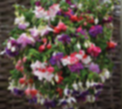 Neals hanging baskets front.png