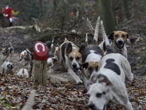 Fox hunting webinar leak exposes alleged illegal hunting in the UK