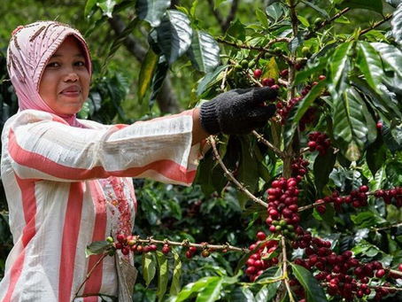 Sustainable Coffee Certifications: Organic & Fairtrade Beans