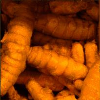Fresh Turmeric 50g