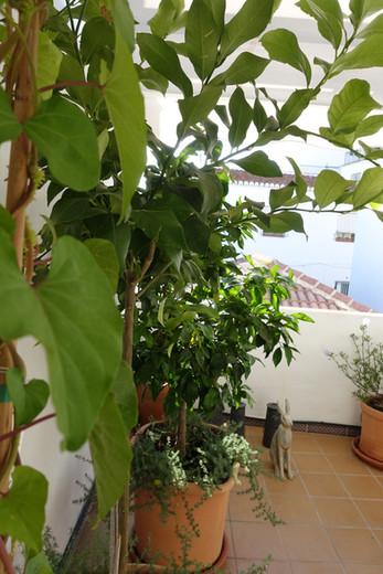 Green at terrace