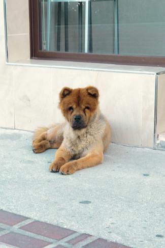 Local dog