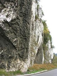 types-limestone-fossils-1_1-800X800.jpg