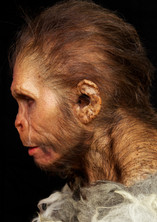 Neanderthaler B2.jpg